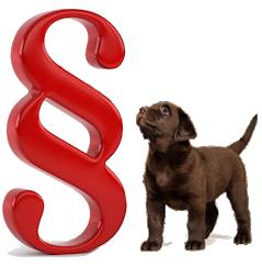 läufige hunde schutz rüden